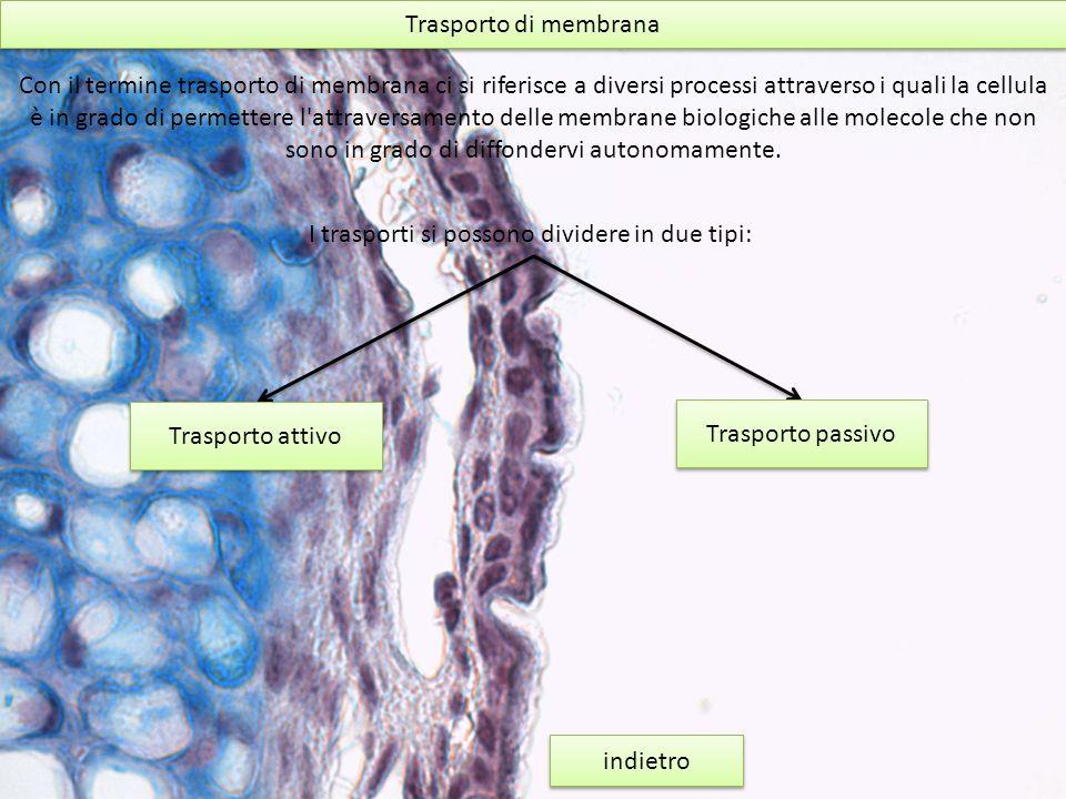 Trasporto di membrana Con il termine trasporto di membrana ci si riferisce a diversi processi attraverso i quali la cellula è in grado di permettere l