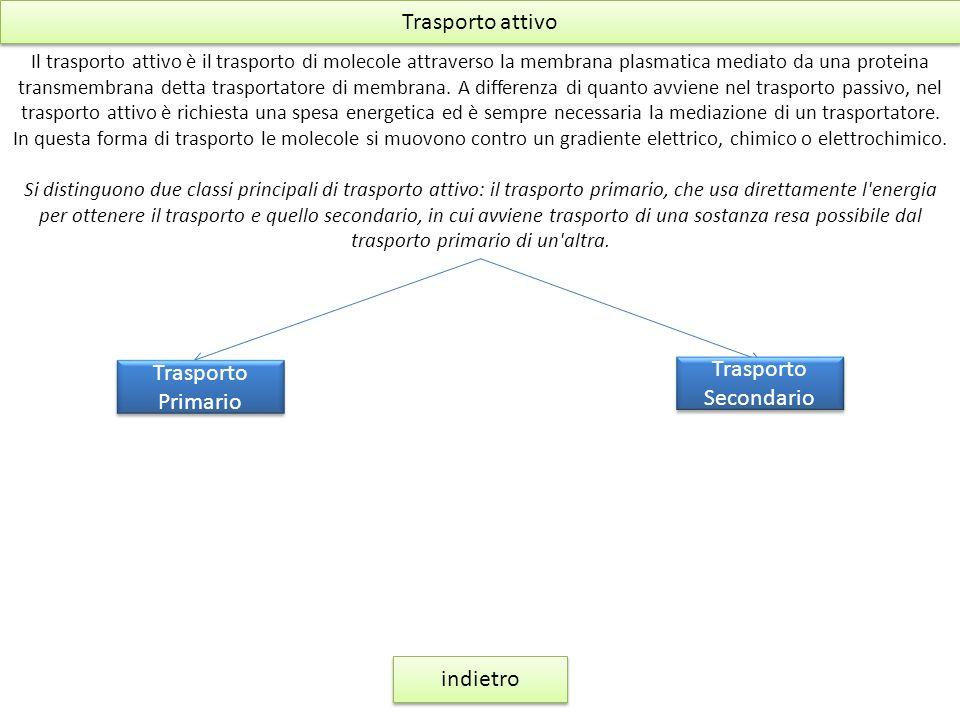 Trasporto attivo Il trasporto attivo è il trasporto di molecole attraverso la membrana plasmatica mediato da una proteina transmembrana detta trasport