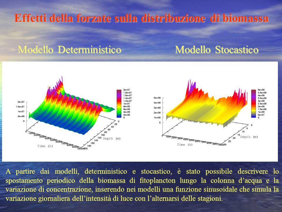 Effetti della forzate sulla distribuzione di biomassa Modello DeterministicoModello Stocastico A partire dai modelli, deterministico e stocastico, è s