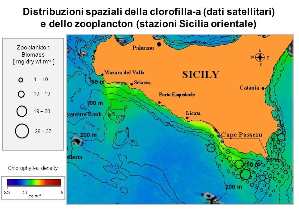Distribuzioni spaziali della clorofilla-a (dati satellitari) e dello zooplancton (stazioni Sicilia orientale) 1 – 10 10 – 19 19 – 28 Zooplankton Bioma