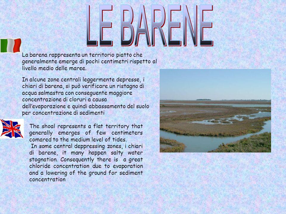 In alcune zone centrali leggermente depresse, i chiari di barena, si può verificare un ristagno di acqua salmastra con conseguente maggiore concentraz