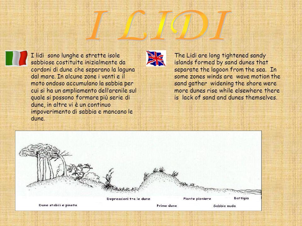 I lidi sono lunghe e strette isole sabbiose costituite inizialmente da cordoni di dune che separano la laguna dal mare. In alcune zone i venti e il mo