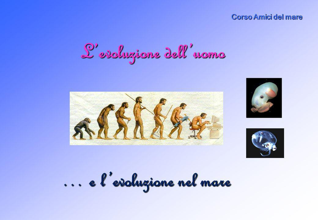 Di cosa parleremo A.Evoluzione marina B.Levoluzione delluomo C.Non sempre gli abitanti del mare si adattano alle azioni delluomo D.Cosa puoi fare per proteggere la vita nel mare?