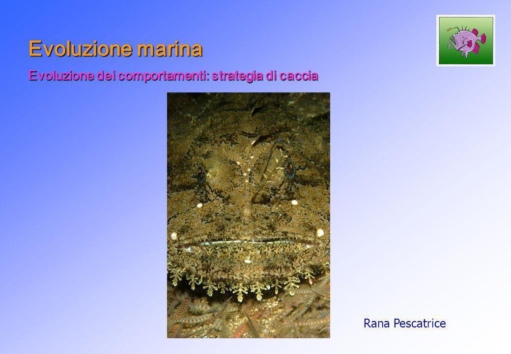Evoluzione marina Evoluzione dei comportamenti: strategia di caccia Rana Pescatrice