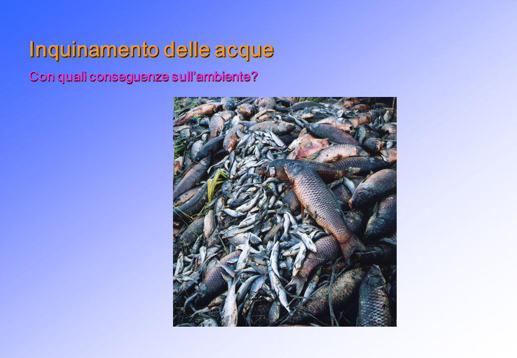 Inquinamento delle acque Con quali conseguenze sullambiente?