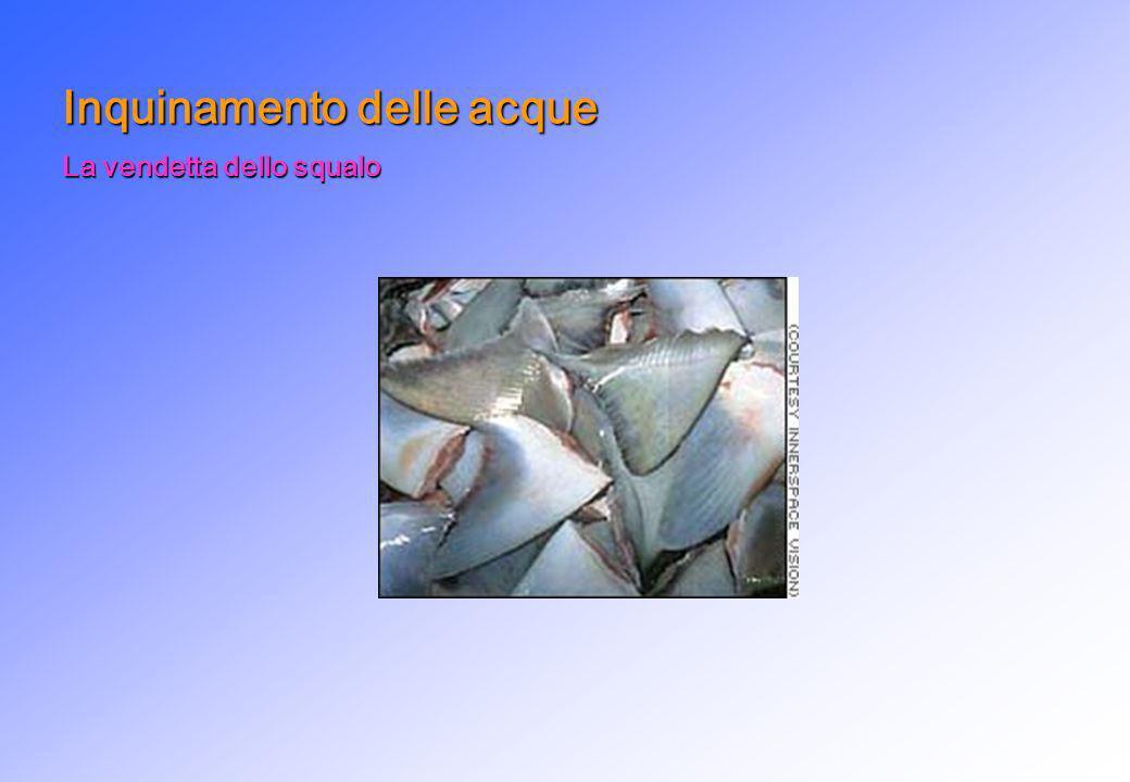 La vendetta dello squalo