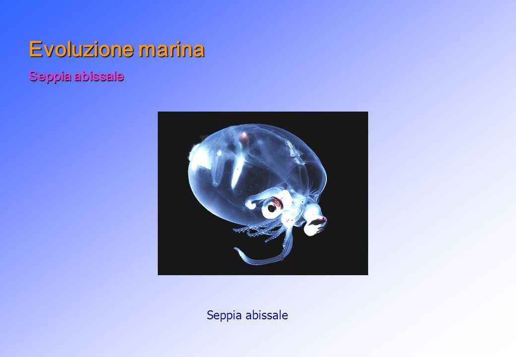 Seppia abissale Evoluzione marina Seppia abissale