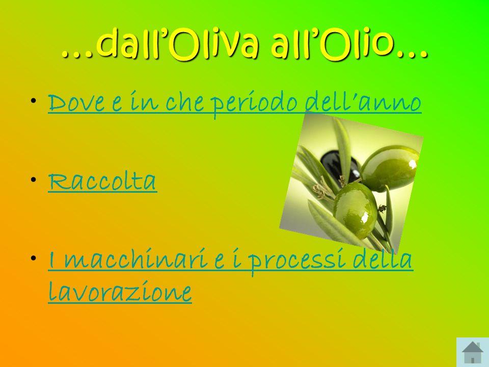 Dove e in che periodo dellanno Loliva è il frutto commestibile dellulivo, albero che cresce nel Mediterraneo.