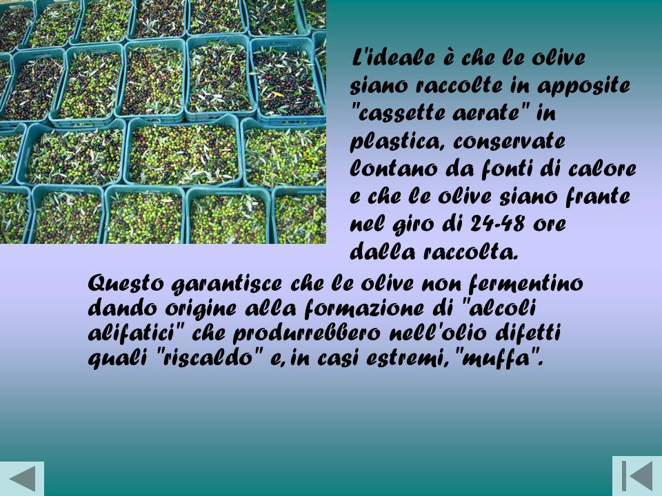 I macchinari e i processi di lavorazione Dopo la raccolta, le olive vengono portate al frantoio dove verranno spremute.