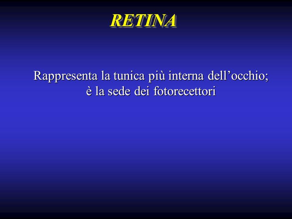 RETINARETINA Rappresenta la tunica più interna dellocchio; è la sede dei fotorecettori