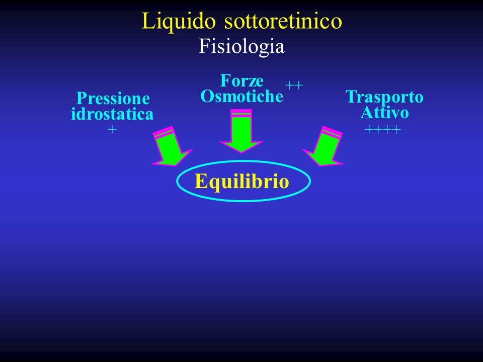 Liquido sottoretinico Fisiologia Pressione idrostatica Forze Osmotiche Trasporto Attivo Equilibrio ++ +++++