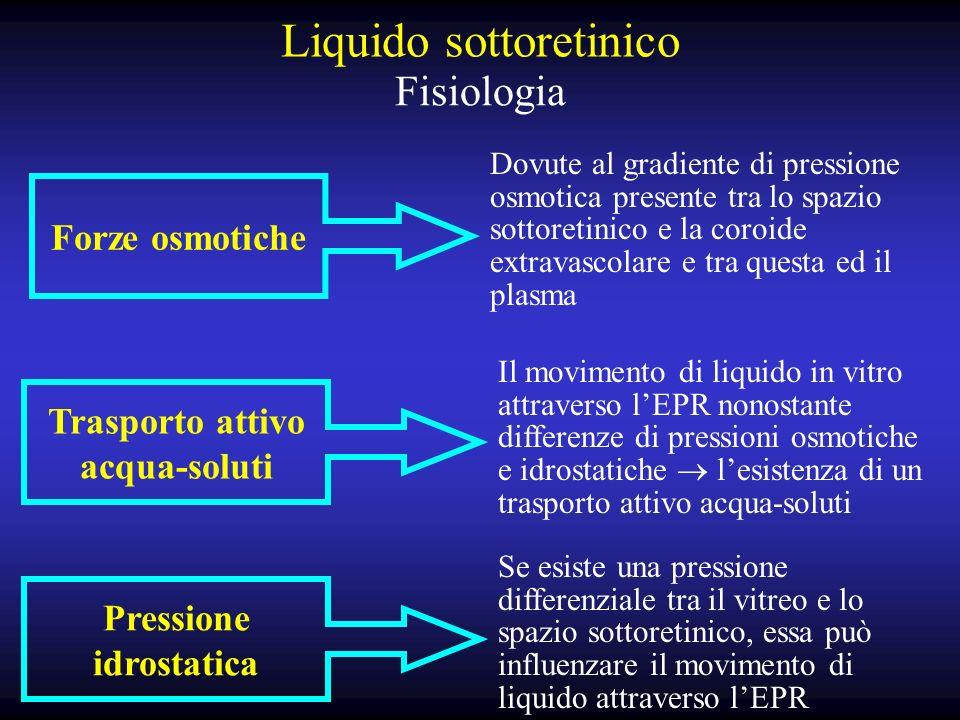 Liquido sottoretinico Fisiologia Forze osmotiche Dovute al gradiente di pressione osmotica presente tra lo spazio sottoretinico e la coroide extravascolare e tra questa ed il plasma Pressione idrostatica Se esiste una pressione differenziale tra il vitreo e lo spazio sottoretinico, essa può influenzare il movimento di liquido attraverso lEPR Trasporto attivo acqua-soluti Il movimento di liquido in vitro attraverso lEPR nonostante differenze di pressioni osmotiche e idrostatiche lesistenza di un trasporto attivo acqua-soluti