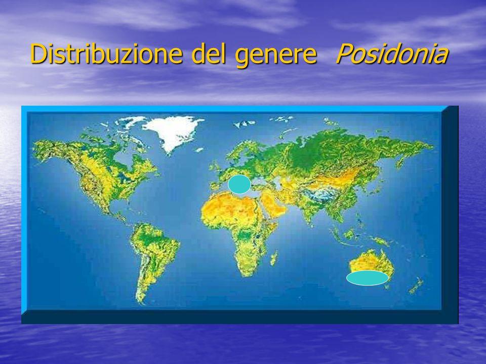 Idrosfera ed ambiente marino Il globo terrestre ha una superficie di circa 510 milioni di kmq di cui 361 ricoperti da mari ed oceani che contengono il 97% dellacqua disponibile sulla Terra Il globo terrestre ha una superficie di circa 510 milioni di kmq di cui 361 ricoperti da mari ed oceani che contengono il 97% dellacqua disponibile sulla Terra Le acque marine sono sistemi fortemente tamponati per la loro composizione e per la costanza chimica e termica dovuta alla enorme massa degli oceani stessi Le acque marine sono sistemi fortemente tamponati per la loro composizione e per la costanza chimica e termica dovuta alla enorme massa degli oceani stessi