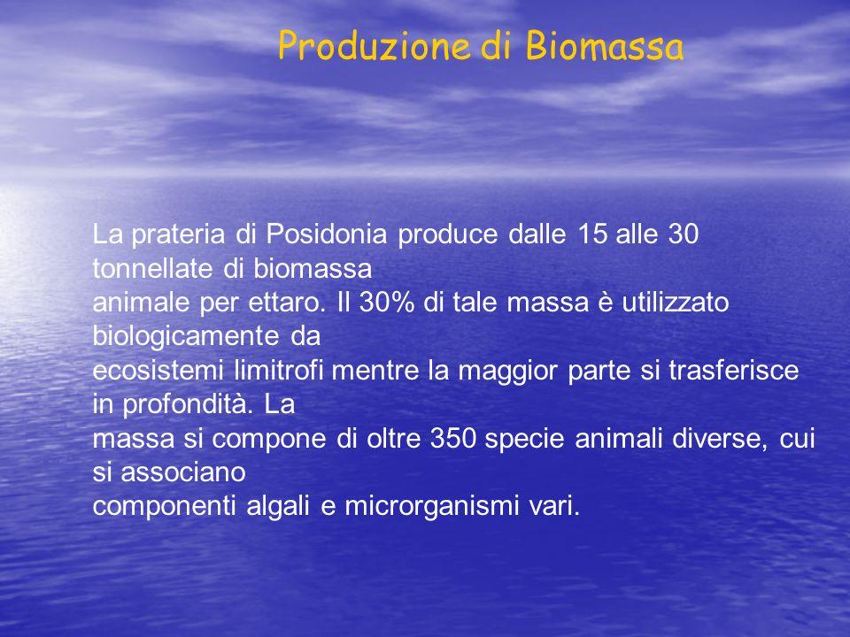 La prateria di Posidonia produce dalle 15 alle 30 tonnellate di biomassa animale per ettaro. Il 30% di tale massa è utilizzato biologicamente da ecosi