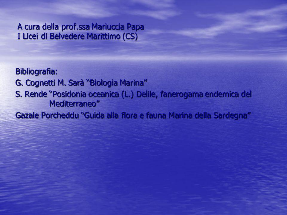 A cura della prof.ssa Mariuccia Papa I Licei di Belvedere Marittimo (CS) Bibliografia: G. Cognetti M. Sarà Biologia Marina S. Rende Posidonia oceanica