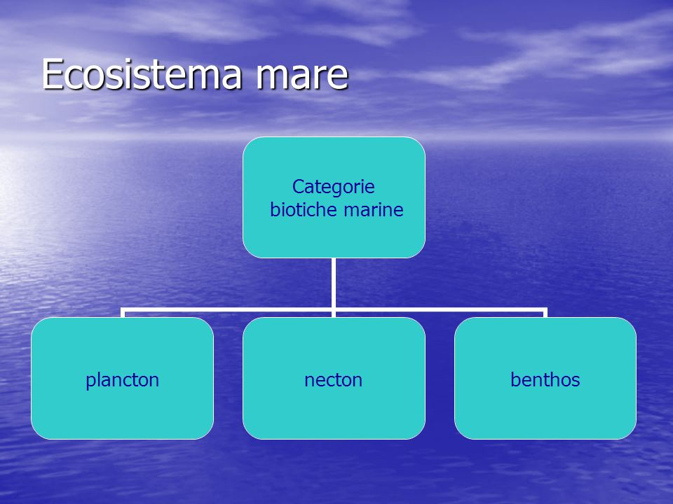 Ecosistema mare Categorie biotiche marine planctonnectonbenthos