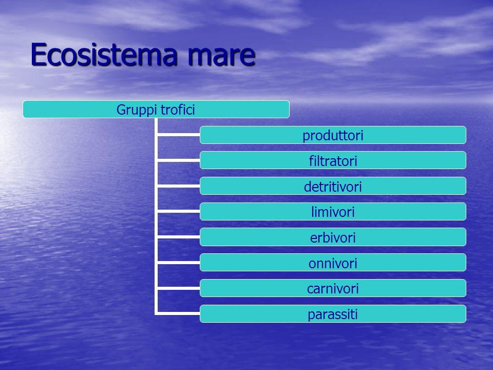 Ecosistema mare Organismi marini batterialghepiante animali