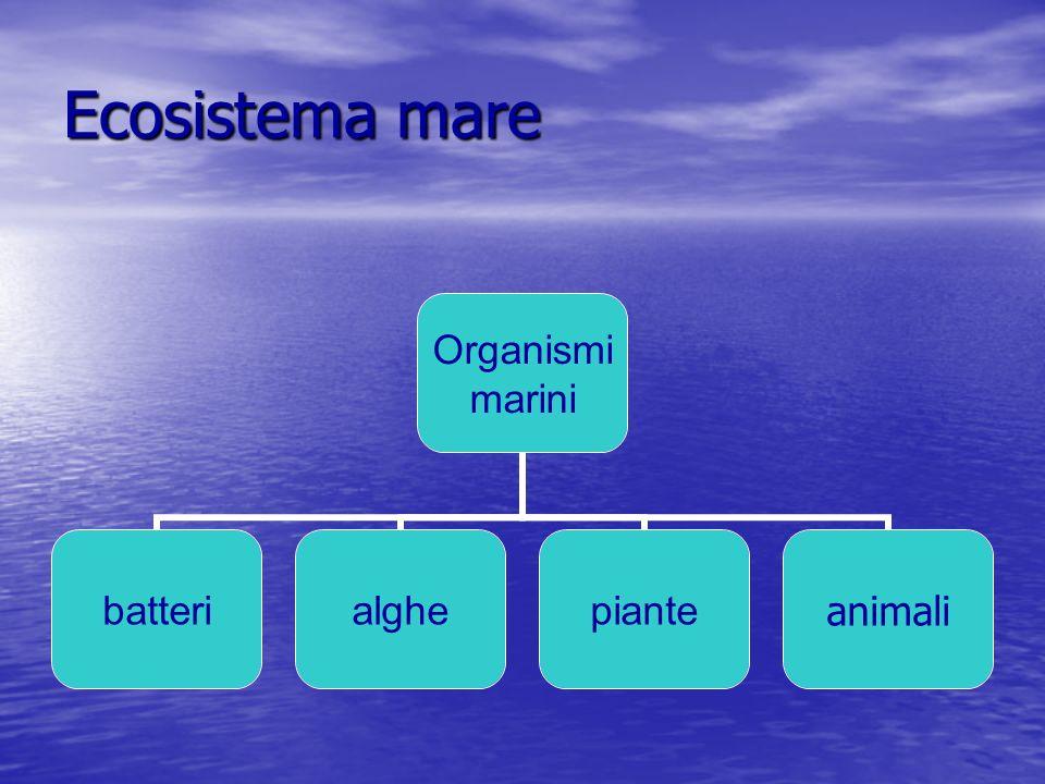 La prateria di Posidonia produce dalle 15 alle 30 tonnellate di biomassa animale per ettaro.