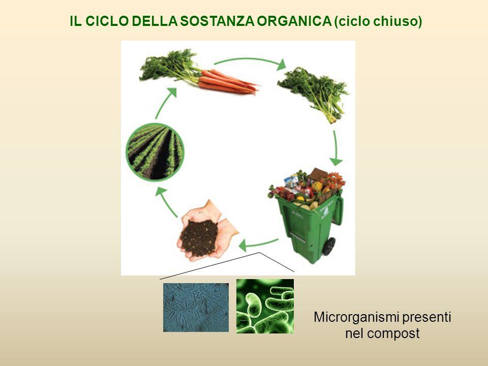 Microrganismi presenti nel compost IL CICLO DELLA SOSTANZA ORGANICA (ciclo chiuso)