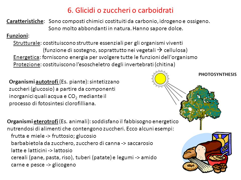 19 Caratteristiche: Sono composti chimici costituiti da carbonio, idrogeno e ossigeno. Sono molto abbondanti in natura. Hanno sapore dolce. Funzioni:
