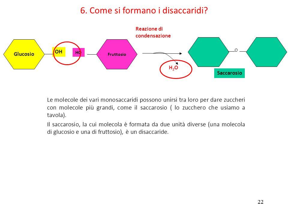 22 6. Come si formano i disaccaridi? Glucosio OH Fruttosio HO Reazione di condensazione H2OH2O Saccarosio O Le molecole dei vari monosaccaridi possono