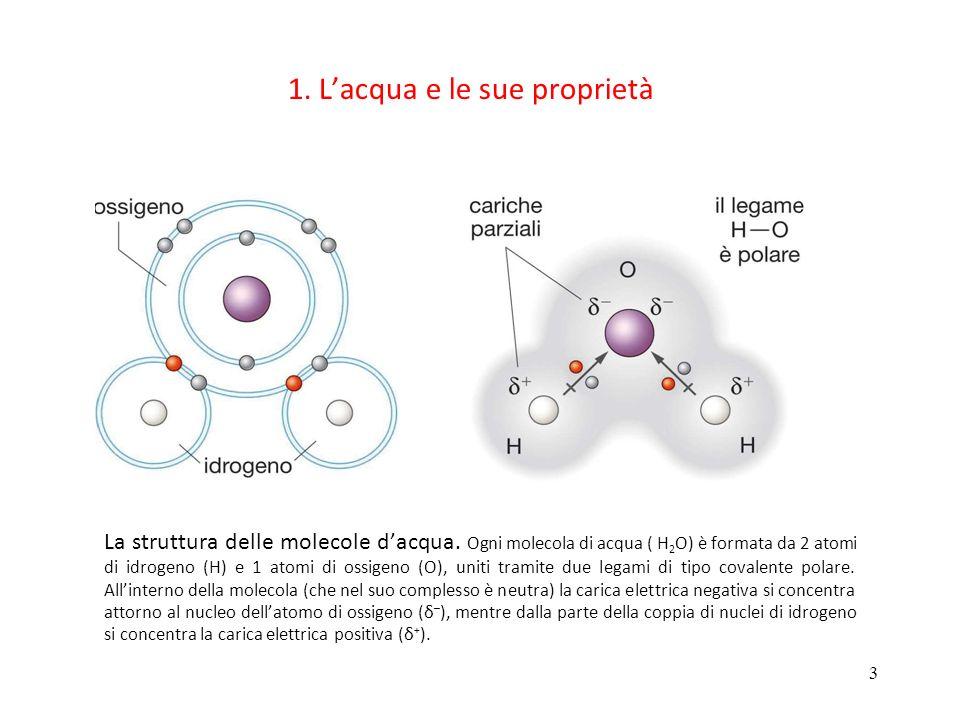 3 1. Lacqua e le sue proprietà La struttura delle molecole dacqua. Ogni molecola di acqua ( H 2 O) è formata da 2 atomi di idrogeno (H) e 1 atomi di o