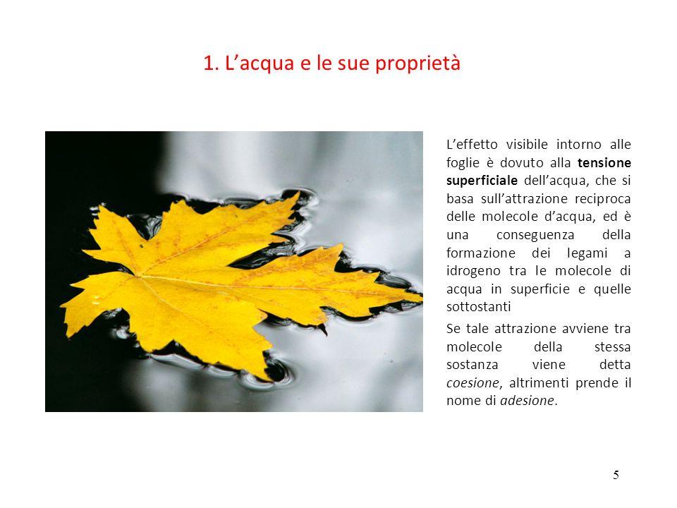 5 1. Lacqua e le sue proprietà Leffetto visibile intorno alle foglie è dovuto alla tensione superficiale dellacqua, che si basa sullattrazione recipro