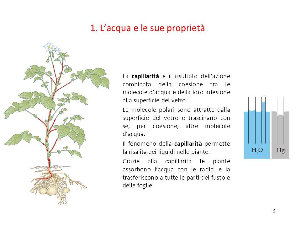 6 1. Lacqua e le sue proprietà La capillarità è il risultato dellazione combinata della coesione tra le molecole dacqua e della loro adesione alla sup