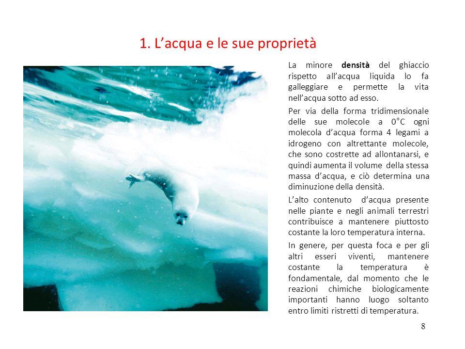 8 1. Lacqua e le sue proprietà La minore densità del ghiaccio rispetto allacqua liquida lo fa galleggiare e permette la vita nellacqua sotto ad esso.
