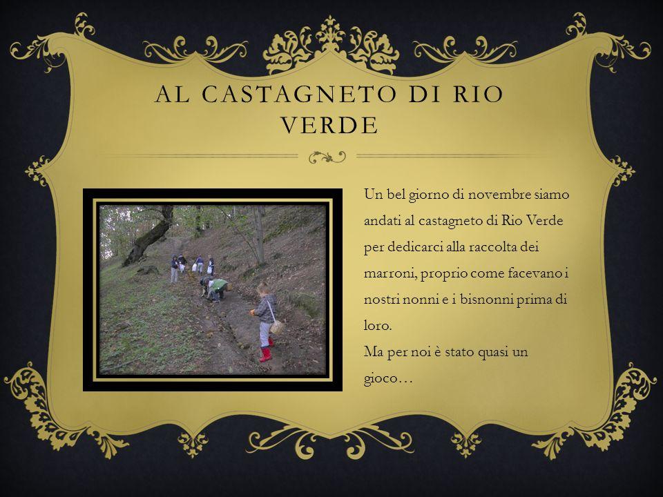 AL CASTAGNETO DI RIO VERDE Un bel giorno di novembre siamo andati al castagneto di Rio Verde per dedicarci alla raccolta dei marroni, proprio come fac