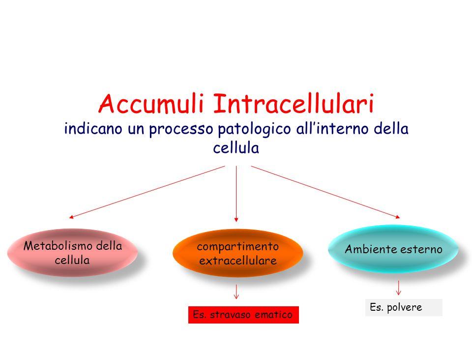Accumuli intracellulari Acqua ed elettroliti Lipidi Carboidrati Proteine Pigmenti vari Se la cellula è incapace di metabolizzare una sostanza, essa sarà condannata a convivere con tale sostanza