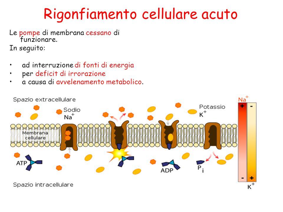 Le pompe di membrana cessano di funzionare. In seguito: ad interruzione di fonti di energia per deficit di irrorazione a causa di avvelenamento metabo