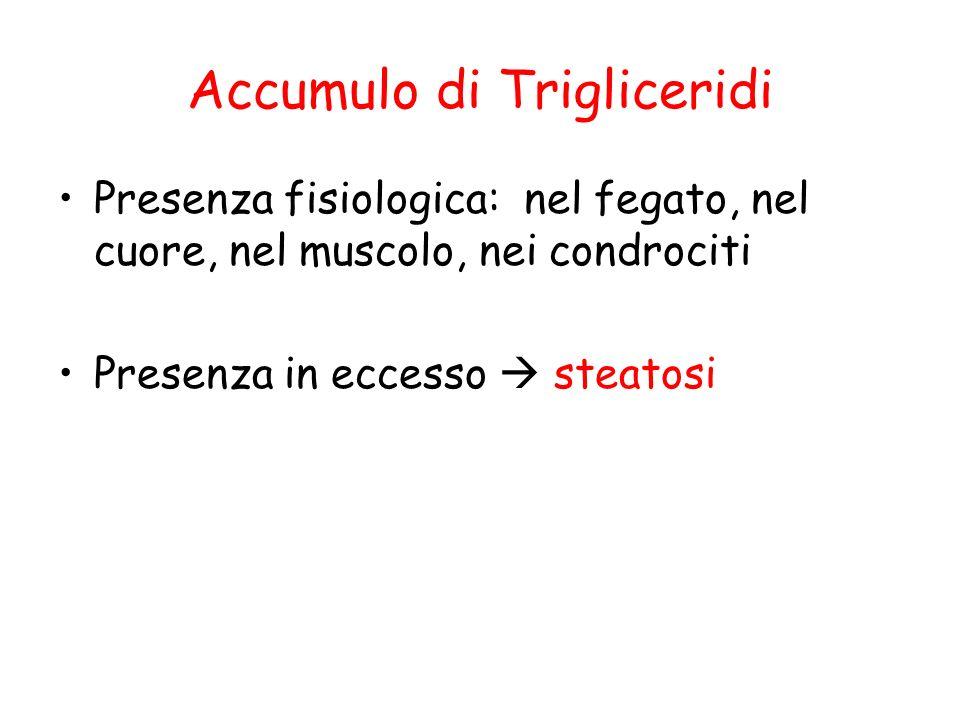 Accumulo di Trigliceridi Presenza fisiologica: nel fegato, nel cuore, nel muscolo, nei condrociti Presenza in eccesso steatosi