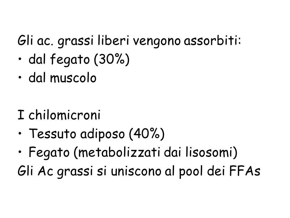 Gli ac. grassi liberi vengono assorbiti: dal fegato (30%) dal muscolo I chilomicroni Tessuto adiposo (40%) Fegato (metabolizzati dai lisosomi) Gli Ac
