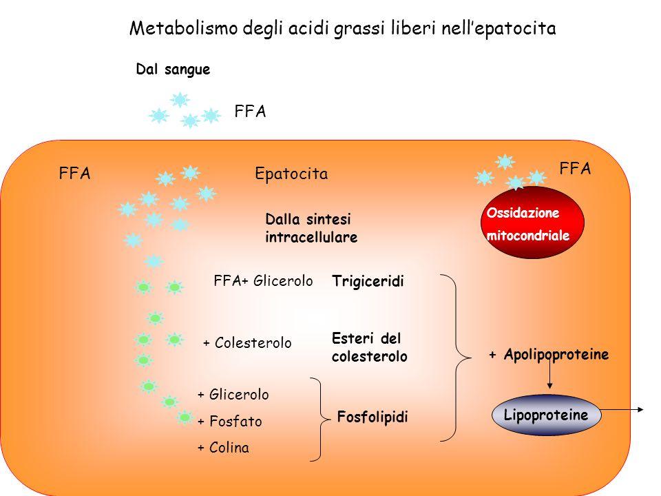 Dal sangue Dalla sintesi intracellulare Epatocita + Glicerolo + Fosfato + Colina Fosfolipidi Esteri del colesterolo Trigiceridi + Apolipoproteine Meta