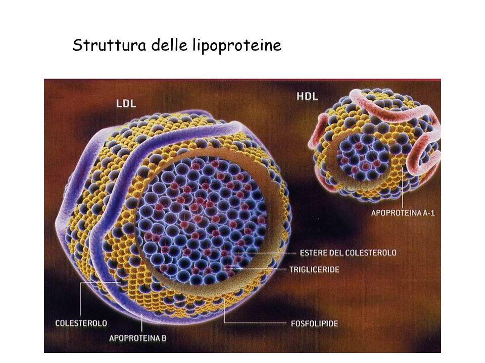 Struttura delle lipoproteine