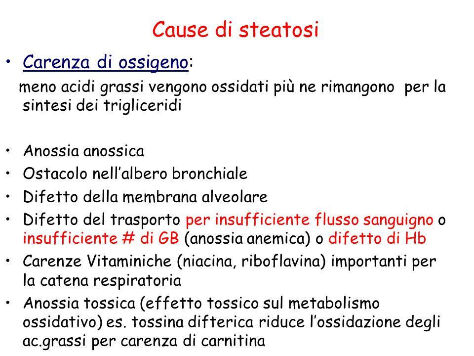 Cause di steatosi Carenza di ossigeno: meno acidi grassi vengono ossidati più ne rimangono per la sintesi dei trigliceridi Anossia anossica Ostacolo n