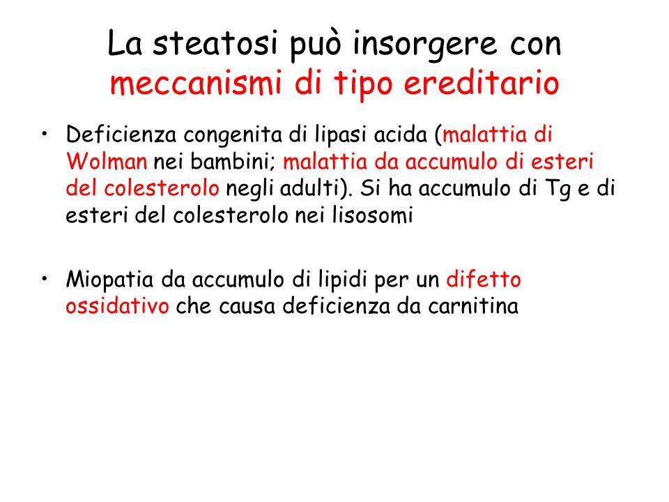La steatosi può insorgere con meccanismi di tipo ereditario Deficienza congenita di lipasi acida (malattia di Wolman nei bambini; malattia da accumulo