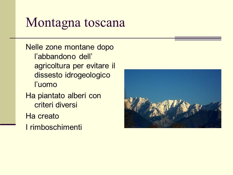 Montagna toscana Nelle zone montane dopo labbandono dell agricoltura per evitare il dissesto idrogeologico luomo Ha piantato alberi con criteri divers