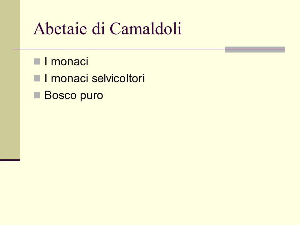 Abetaie di Camaldoli I monaci I monaci selvicoltori Bosco puro