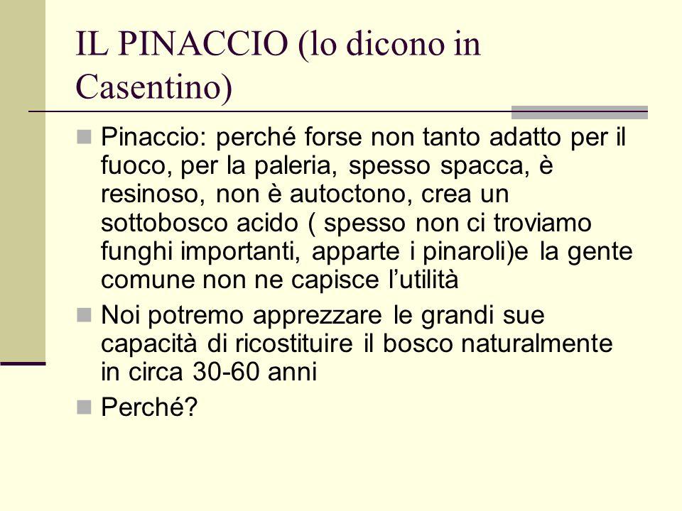 IL PINACCIO (lo dicono in Casentino) Pinaccio: perché forse non tanto adatto per il fuoco, per la paleria, spesso spacca, è resinoso, non è autoctono,