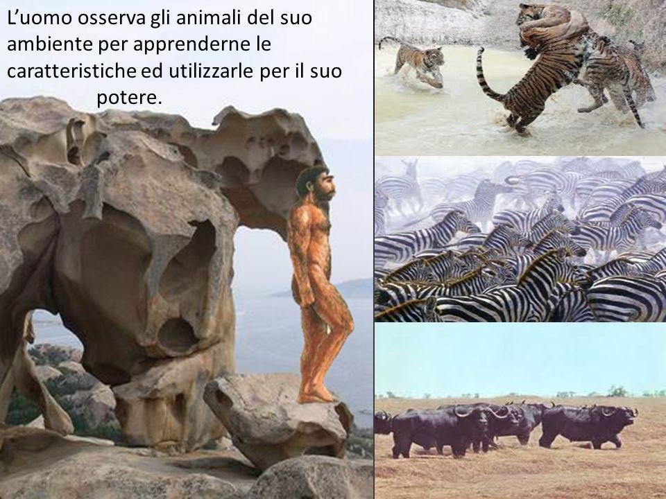 Luomo osserva gli animali del suo ambiente per apprenderne le caratteristiche ed utilizzarle per il suo potere.