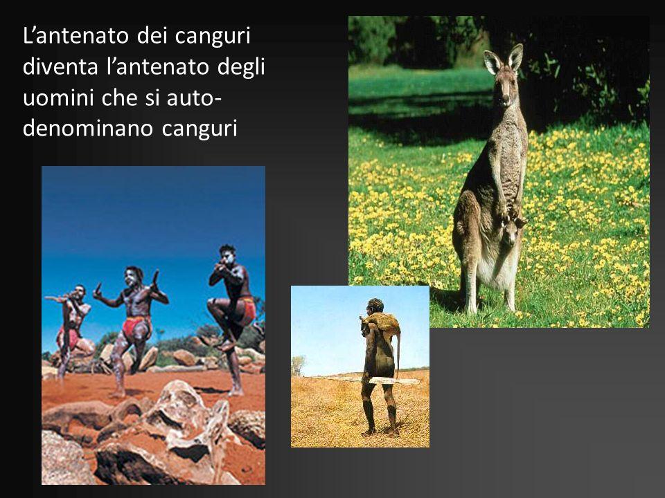Lantenato dei canguri diventa lantenato degli uomini che si auto- denominano canguri