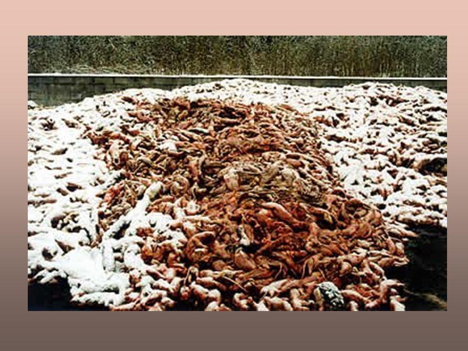 Scarti dellindustria della pellicceria: fosse ricolme di corpi nudi