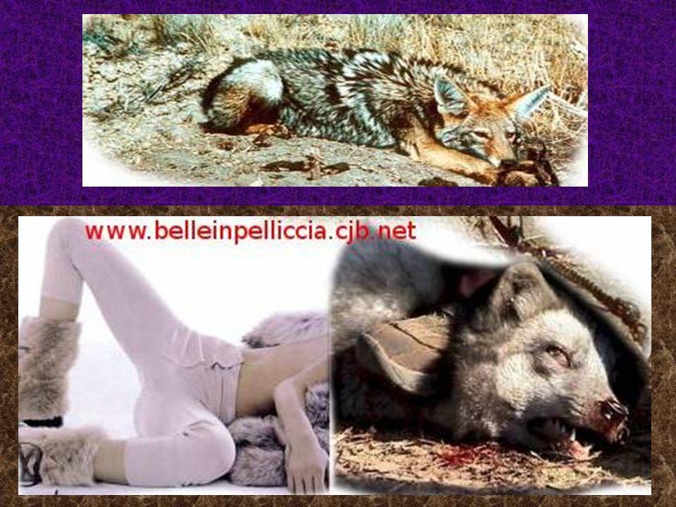 Quando indossi una pelliccia indossi il cadavere di un animale barbaramente ucciso