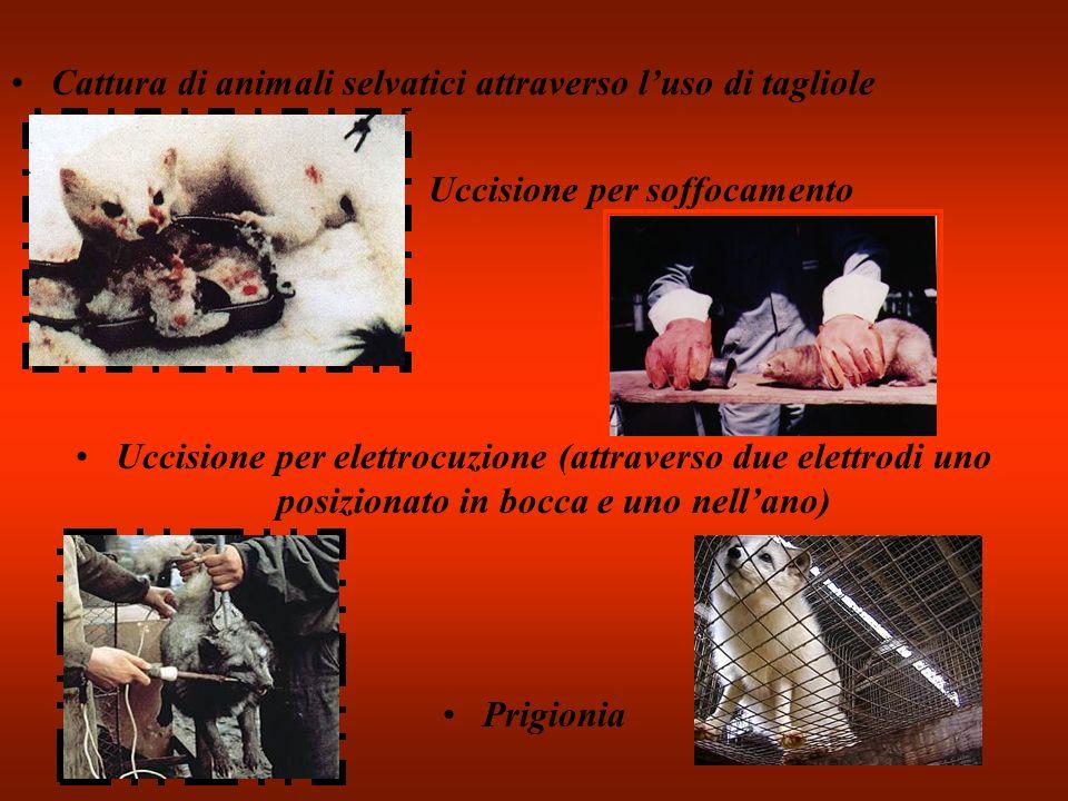 Cattura di animali selvatici attraverso luso di tagliole Uccisione per soffocamento Uccisione per elettrocuzione (attraverso due elettrodi uno posizio