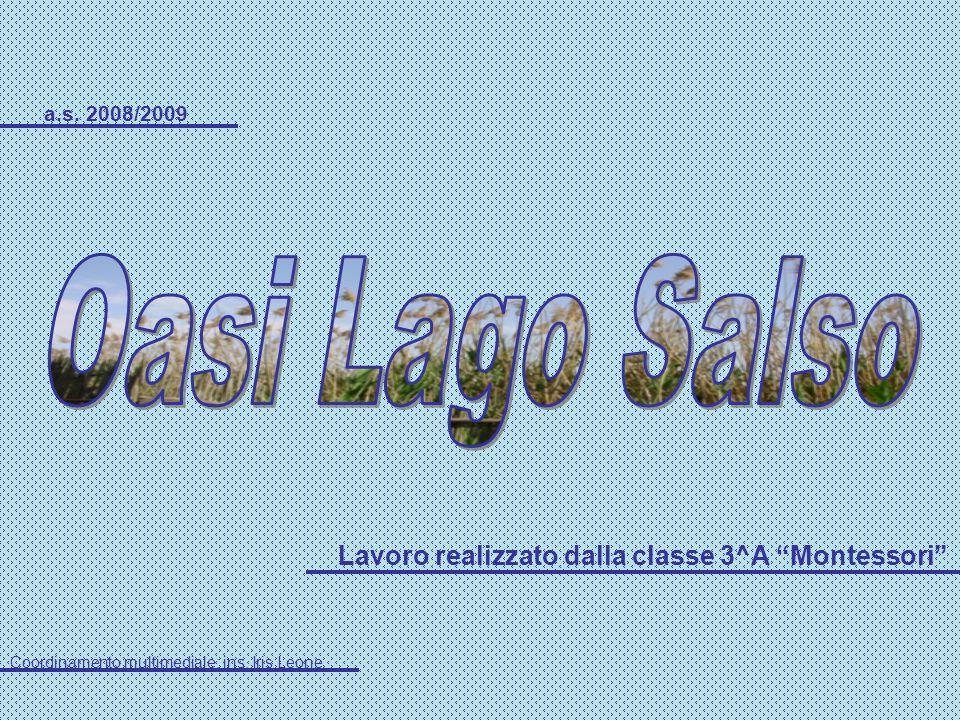 a.s. 2008/2009 Lavoro realizzato dalla classe 3^A Montessori Coordinamento multimediale: ins. Iris Leone