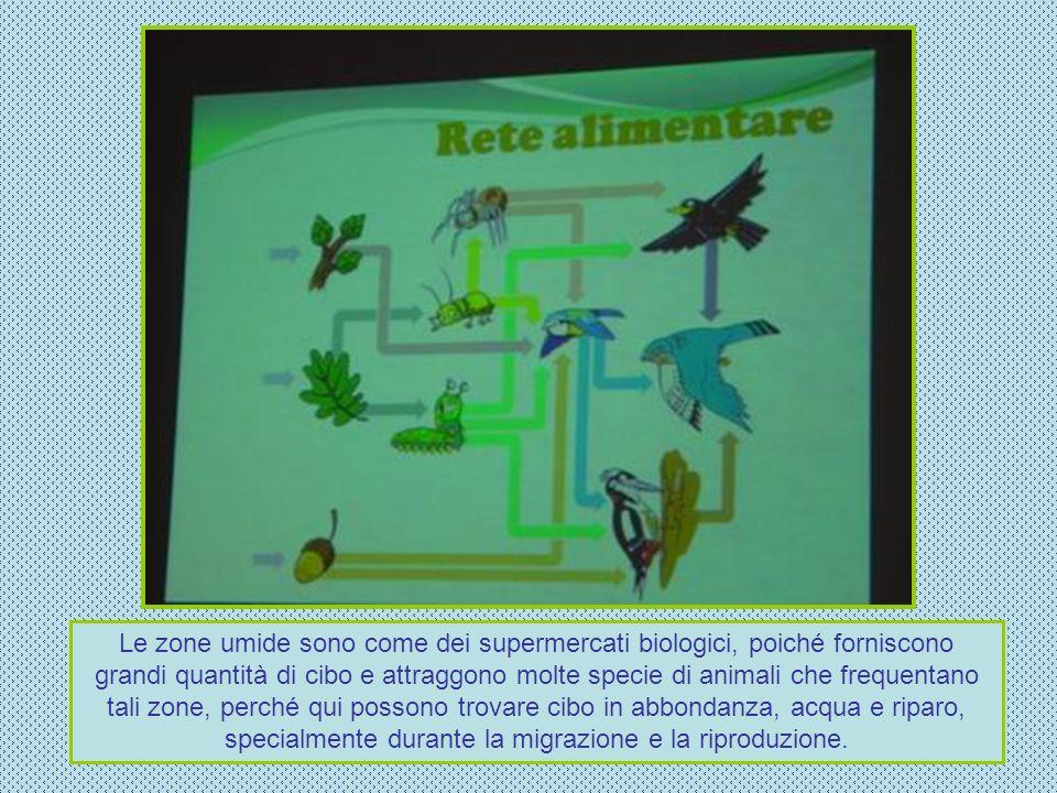 Le zone umide sono come dei supermercati biologici, poiché forniscono grandi quantità di cibo e attraggono molte specie di animali che frequentano tal