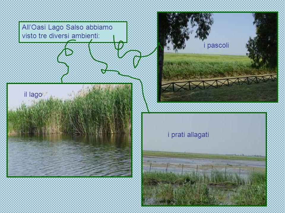 AllOasi Lago Salso abbiamo visto tre diversi ambienti: i pascoli i prati allagati il lago