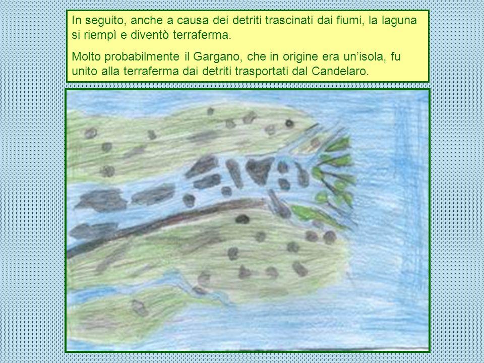 In seguito, anche a causa dei detriti trascinati dai fiumi, la laguna si riempì e diventò terraferma. Molto probabilmente il Gargano, che in origine e